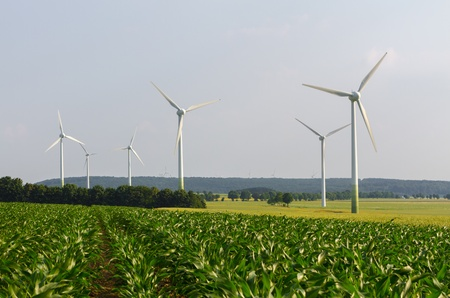Wind engines between corn field and wood