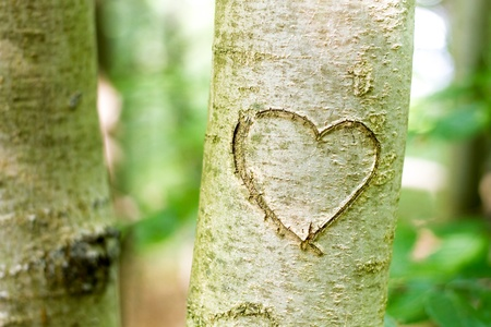 木に刻まれたハート形