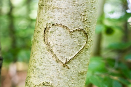 romantic heart: heart shape carved on tree