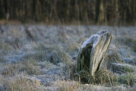 Wooden stump in white frosted grass surrounding