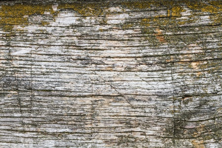 moss: Wooden plank with moss Stock Photo
