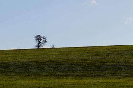 Meadow field with one single tree Stock Photo
