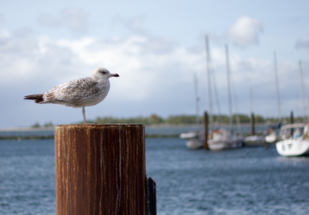 Seagull with boats in haven Stock Photo