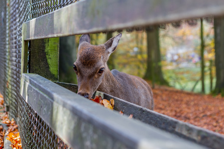 Young deer at the cratch Stock Photo