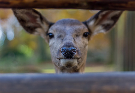 Deer at a park into the camera