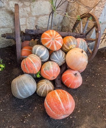 Pumpkins on an old traditional farm Stock Photo