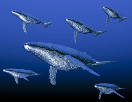 humpback: Digital visualization of humpback whale Stock Photo