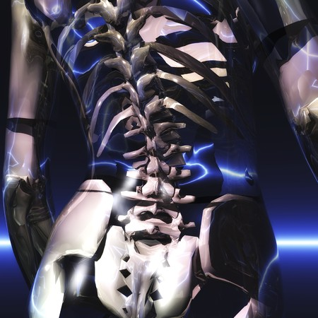 intervertebral disc: digital visualization of a skeleton