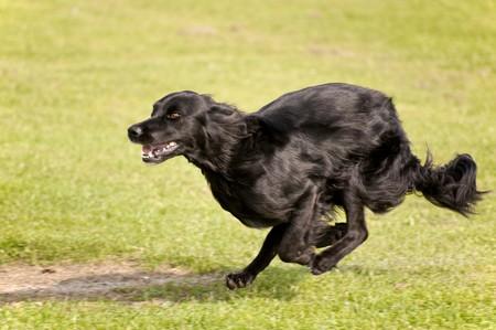 dog race photo