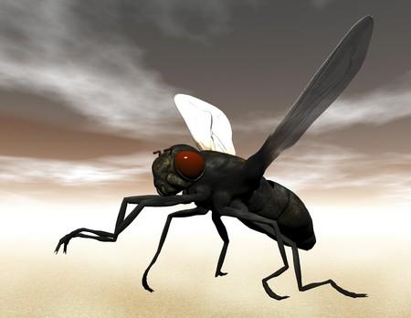 Digital visualization of a fly photo