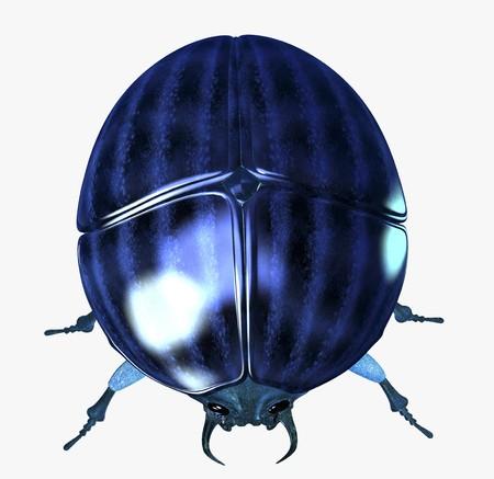 scarab: Digital visualization of a scarab