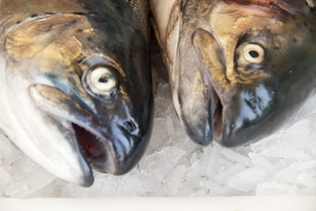 market hall: filleting salmons in a fish market hall