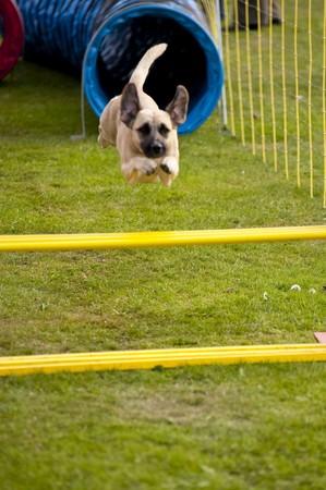 scène sur un sept réunion de chien. 2009 à kiel, Allemagne