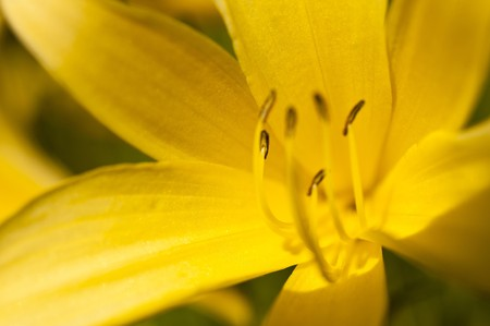 deatil: Deatil of a lily flower on a meadow Stock Photo
