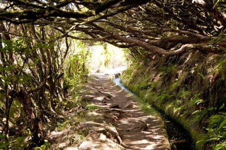 scène de portugal  île de Madère.
