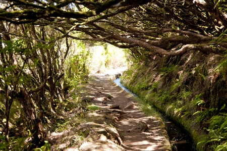 scene in portugal  island of madeira photo