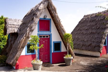 floristic: scene in portugal  island of madeira
