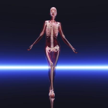 Digital visualization of a skeleton photo