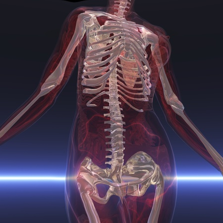 Digital visualization of a skeleton Stock Photo - 9118110