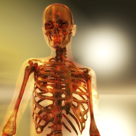 Digital visualization of a skeleton photo