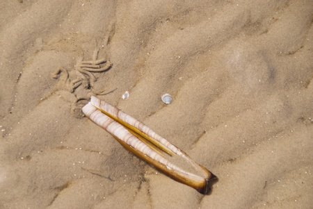sand mold: Beach of St. Peter-Ording, Germany Stock Photo