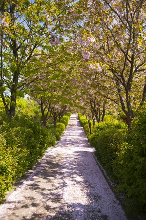 blossom time: Blossom time Stock Photo