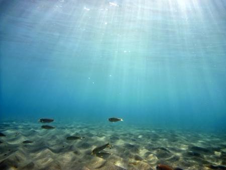 seabed: Sott'acqua