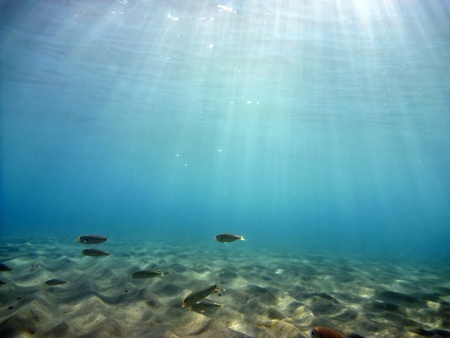 aegean sea: Underwater Stock Photo
