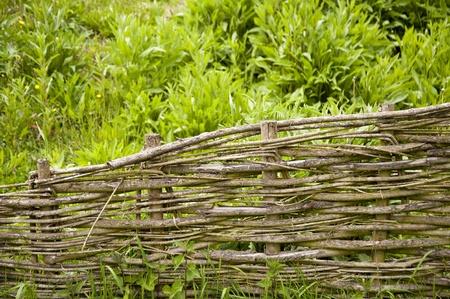 forest conservation: Old Garden