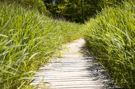boardwalk trail: Wooden path