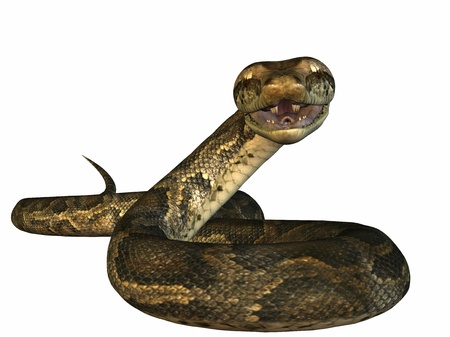 Python Stock Photo - 11847510