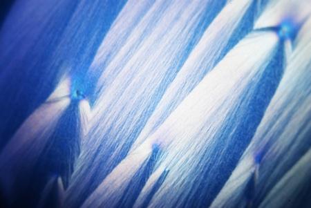 ascorbic: Microcrystals of ascorbic acid in polarized light Stock Photo