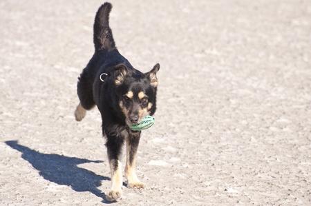 sandbank: Young Dog