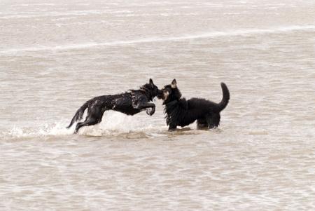 sandbank: Playing Dogs