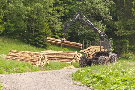 Forestry Stock Photo