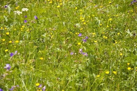 Flowering Meadow photo