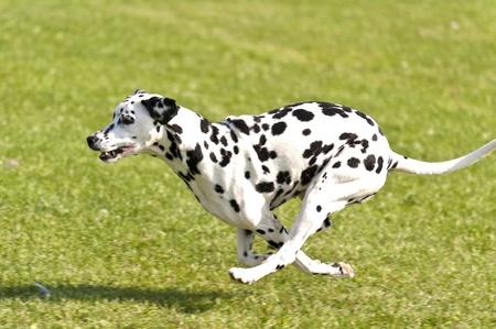 Race de chien Banque d'images - 15384265