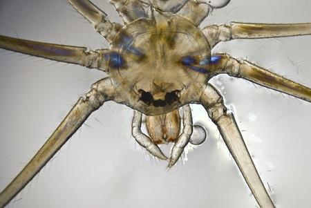 Microphoto d'une araignée