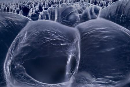 polarization: Microphoto of Bubbles Stock Photo