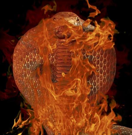serpiente cobra: Cobra Foto de archivo