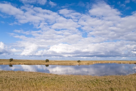 aslant: Coastal area in Darss, Germany Stock Photo