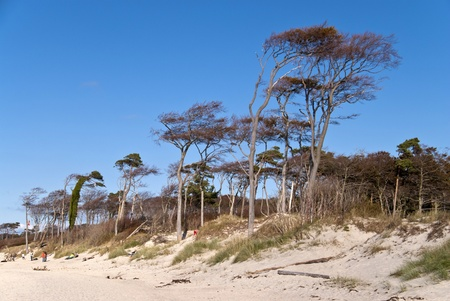aslant: Beach Weststrand of darss, Germany