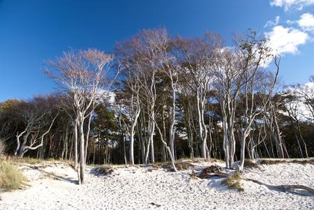 aslant: Beach Weststrand of darss, Germany