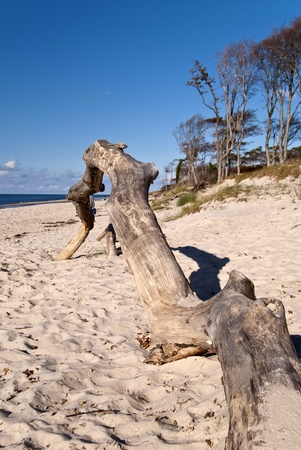 Beach Weststrand of darss, Germany Stock Photo - 15810777