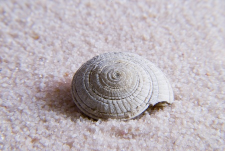 Seashell photo