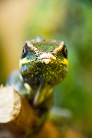 cold blooded: Reptile Stock Photo