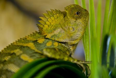 echse: Reptile Stock Photo
