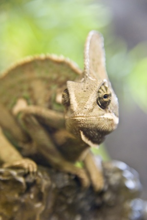 adaptable: Reptile Stock Photo