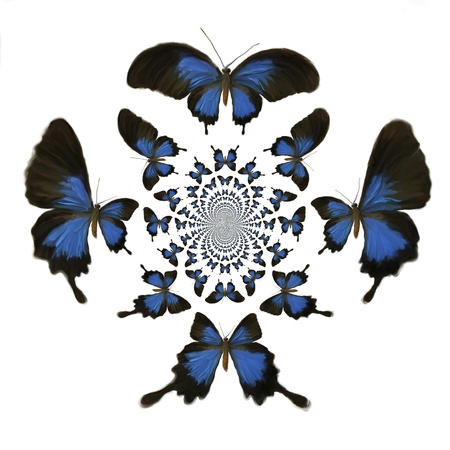 exempted: Kaleidoscopic Butterflies Illustration