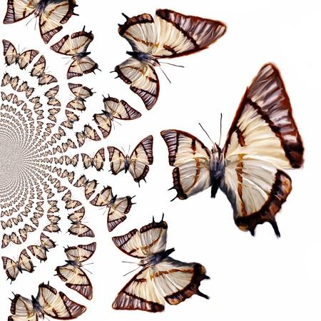 kaleidoscopic: Kaleidoscopic Butterflies Illustration
